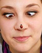 鼻子上的瓢虫 — 图库照片