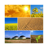 Bioenergy — Stock Photo