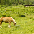 Stock Photo: Brown horse in a pasture