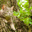 Blue tabby cat with green eyes up in a tree — Stock Photo
