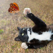 Black and white kitty cat playing with an orange butterfly in flight — Stock Photo #8003468