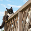 Black and white tuxedo cat on porch railing - Stock Photo