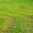 Unevenly cut grass — Stock Photo