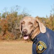 Stock Photo: Funny image of dog wearing uniform