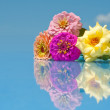 Beautiful flowers with reflection against blue sky — Stock Photo #8004582