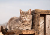 Adorable blue tabby cat resting on a wooden step — Stock Photo