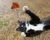 Black and white kitty cat playing with an orange butterfly in flight — Stock Photo