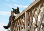 Black and white tuxedo cat on porch railing — Stock Photo