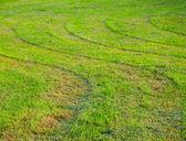 Ongelijk gemaaid gras — Stockfoto