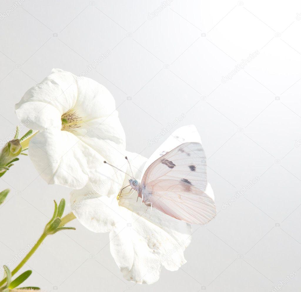 Nuevo fondo de pepinillo de petunia