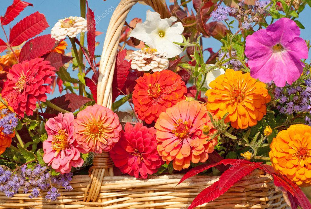 belles fleurs d 39 automne color s dans un panier d 39 osier au soleil photo 8004143. Black Bedroom Furniture Sets. Home Design Ideas
