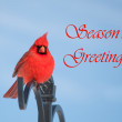 Season's Greetings card with red male Northern Cardinal - Stock Photo