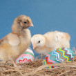 Two Easter chicks in hay with colorful eggs — Stock Photo