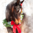 Dreamy Christmas image of a dark bay Arabian horse wearing a wreath — Stock Photo