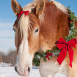 Stock Photo: Draft horse with Christmas wreath around his neck