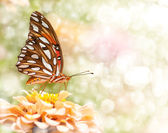 Dreamy image of a Gulf Fritillary Butterfly — Stock Photo