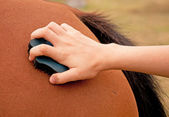 Horse being groomed with a rubber curry comb — Stock Photo