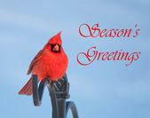 Season's Greetings card with red male Northern Cardinal — Stock Photo