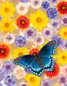 Colorful flowers floating in water, with a blue butterfly — Stock Photo