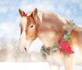 Słodki obraz o tematyce bożego narodzenia koń belgijski projekt z wieniec i łuk — Zdjęcie stockowe