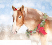 Sweet Christmas themed image of a Belgian draft horse with a wreath and bow — ストック写真