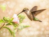 Obraz marzycielski młody mężczyzna koliber — Zdjęcie stockowe