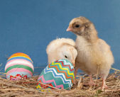 Two adorable Easter chicks in hay — Stock Photo