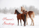 Dos caballos helados en niebla y nieve mirando a distancia — Foto de Stock