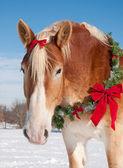 Caballo de tiro con una guirnalda de navidad alrededor de su cuello — Foto de Stock