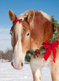 Draft horse with a Christmas wreath around his neck — Стоковое фото