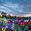 Boats, Flowers and Sunrise - Stock Photo