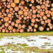 Cut Timber — Stock Photo
