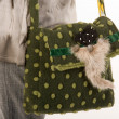 Stock Photo: Shooping-bag
