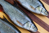 Fresh fishes — Stock Photo