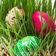 Easter eggs — Stock Photo #9807740