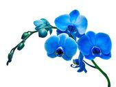 Orchidea flower — Zdjęcie stockowe