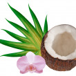 coconut — Stock Photo #8004642
