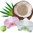 coconut — Stock Photo #8114180