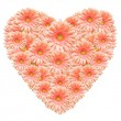 Heart made from pink gerber flowers — Stock Photo