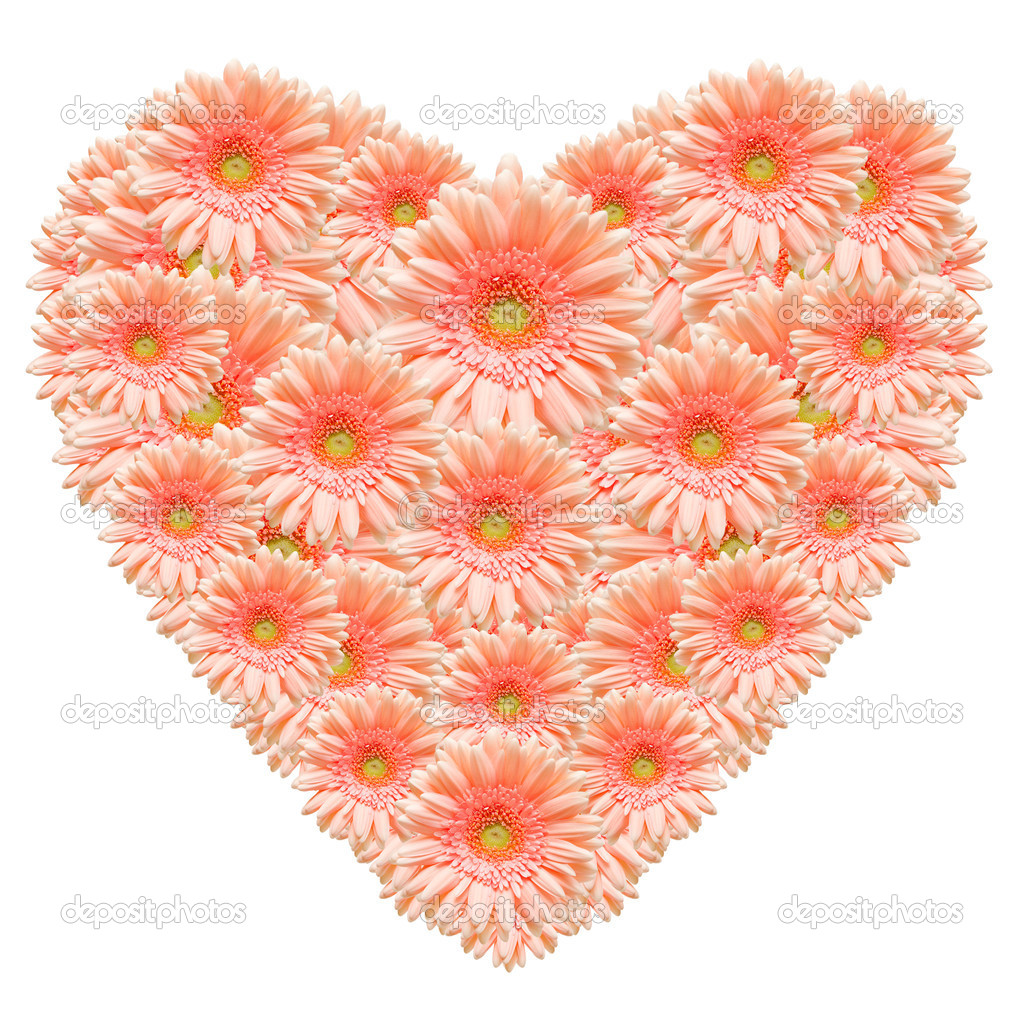 Heart shape made from pink  gerber flowers isolated on white background — Stock Photo #8350530