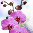 Closeup of orchid flower — Stock Photo #8393402