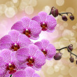 Closeup of orchid flower — Foto Stock