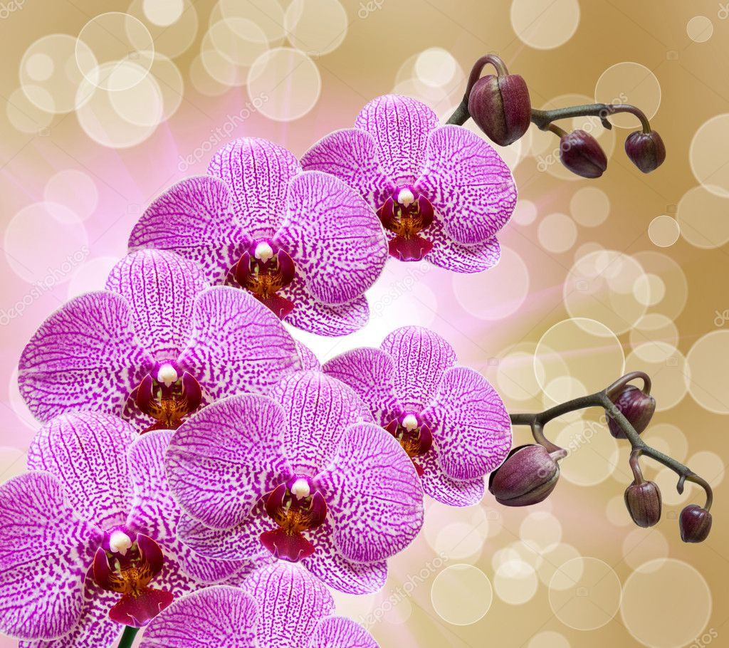 Closeup of orchid flower  Stock Photo #8393405