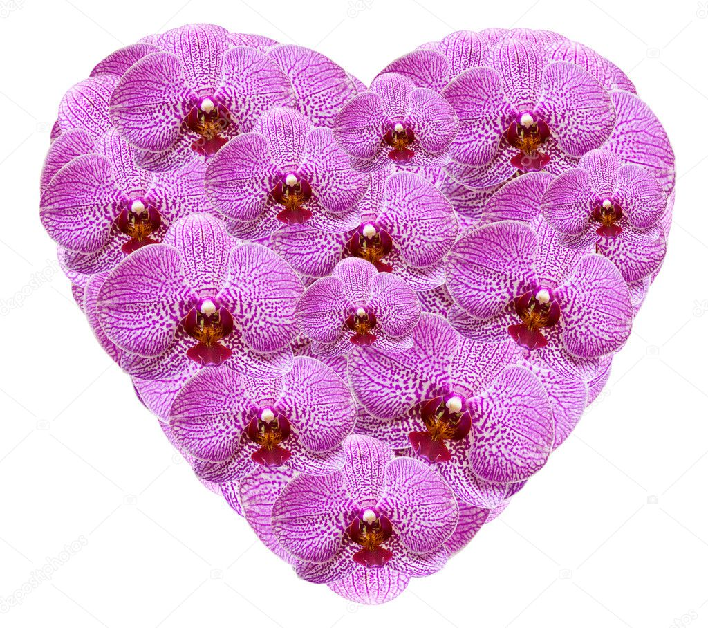 Heart shape made from pink orchid flowers isolated on white background — Stock Photo #8393418