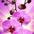 Closeup of orchid flower — Stock Photo #8571780