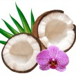Coconut — Stockfoto