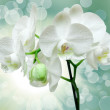 Closeup of orchid flower — Stock Photo #8830261