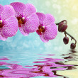 Closeup of orchid flower — Stock Photo #8830272