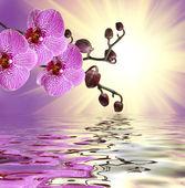 Closeup da flor da orquídea — Foto Stock