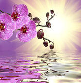 Primo piano del fiore orchidea — Foto Stock